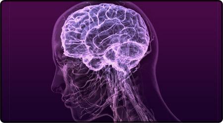المخ البشرى