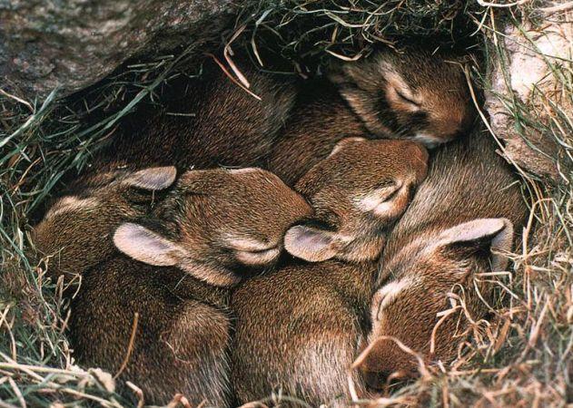 دورة مجانية في السلوك الحيواني