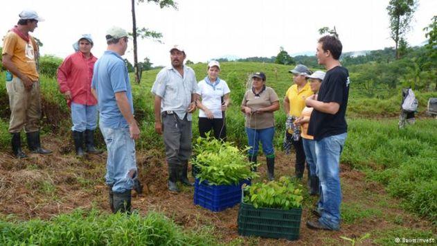 العائد البيئي والاقتصادي لزراعة الاشجار