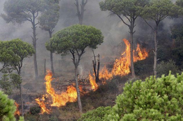 حريق الغابات
