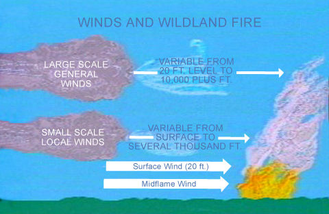 Effects of forests on wind speeds