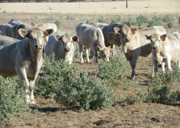 To counter the effects of over grazing