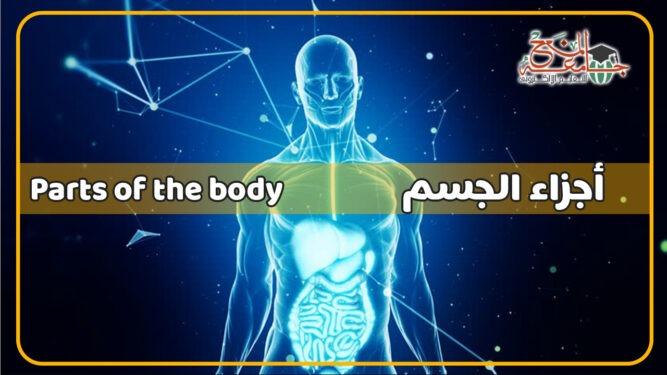 اعضاء الجسم بالانجليزي